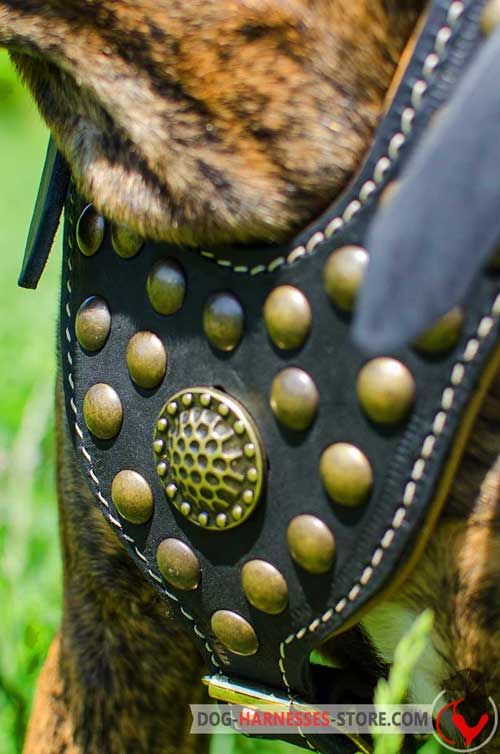 Padded chest plate of leather dog harness