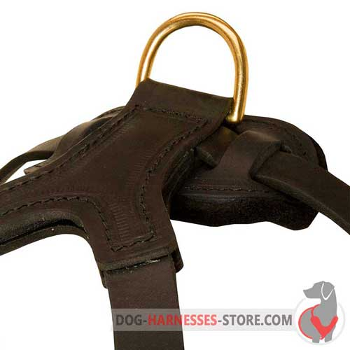 Leather dog harness equipped with brass D-ring