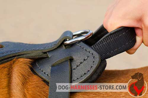 Handy leather harness with control handle