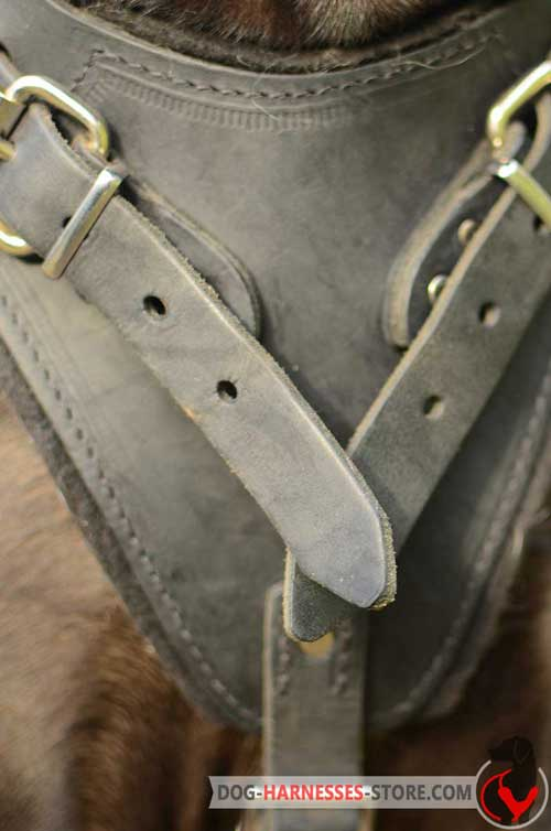 Leather dog harness with chest padding