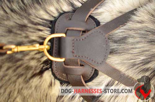 Leather dog harness with sturdy ring for the leash