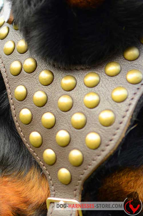 Studded leather dog harness with padded chest plate