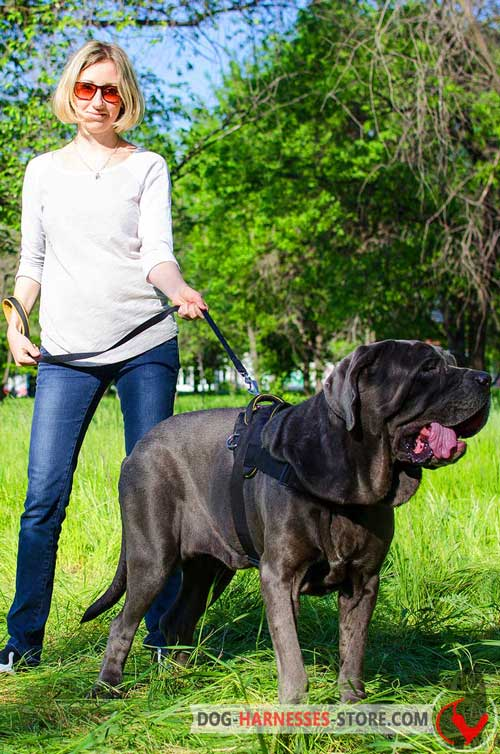 Nylon Mastiff Neapolitan Harness Multifunctional Comfortable for Walking