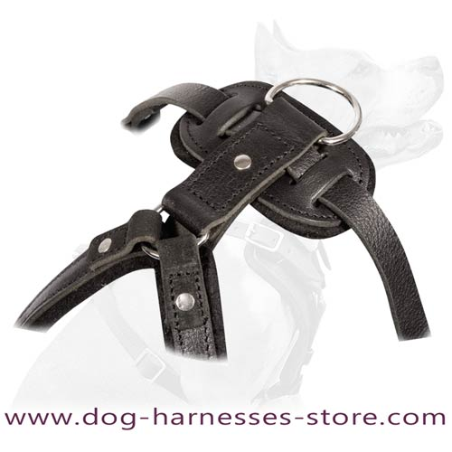 Absolutely safe leather agitation harness