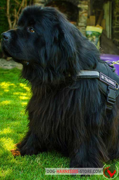 All weather nylon harness for Newfoundland