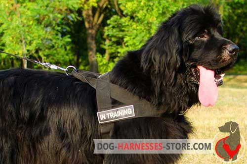 Extra light-weight Newfoundland nylon harness