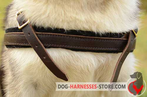 Absolute comfort leather dog harness