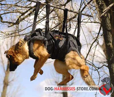 Dependable Akita Inu Harness For Rescue Operations