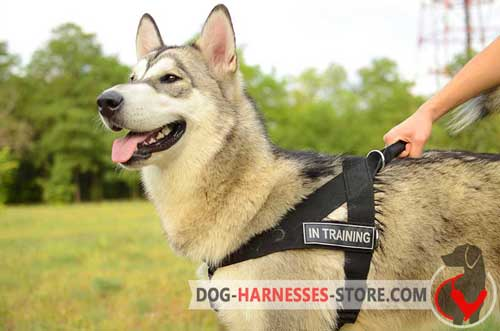 Strong Nylon Alaskan Malamute Harness for Dog Identification