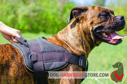 Boxer dog harness intended for different  purposes