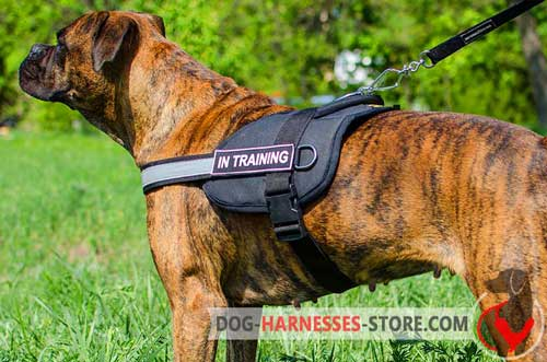 Nylon Boxer harness with reflective strap and ID-patches