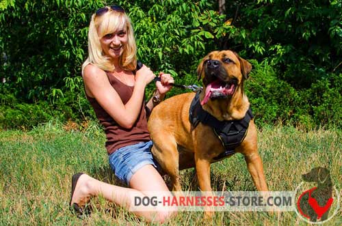 Tracking Cane Corso Harness