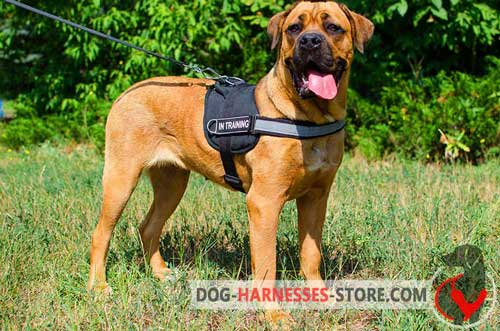 Cane Corso Harness Made of Nylon