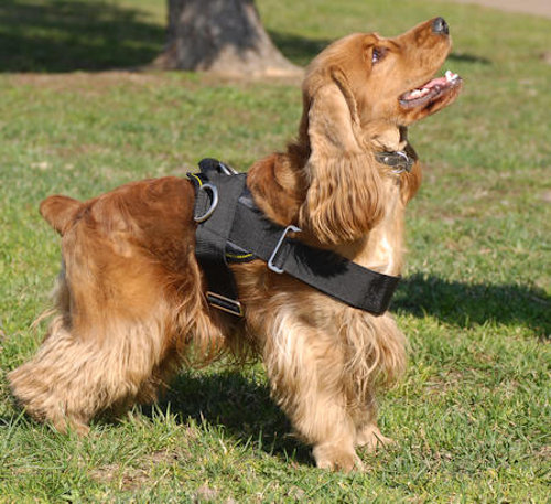 Nylon Cocker Spaniel Harness