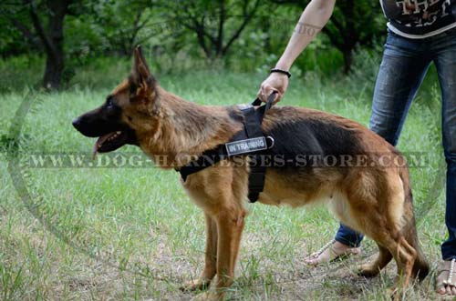 Professional Pulling And Tracking Nylon Dog Harness With  Handle