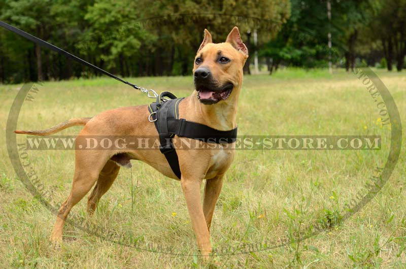 Nylon Dog Harness With Handle For Tracking Training