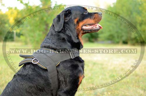 Strong Nylon Dog Harness For Tracking