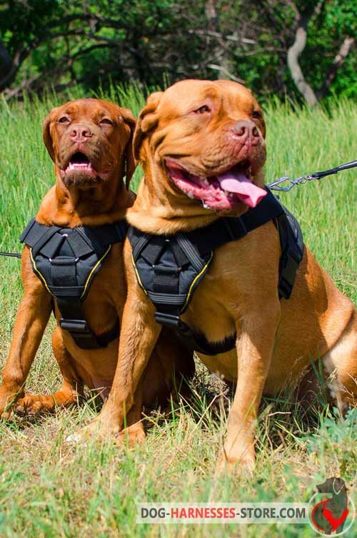 Nylon Dogue de Bordeaux Harness