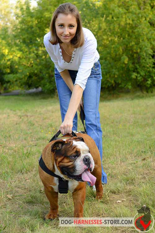 easy control English Bulldog harness with handle