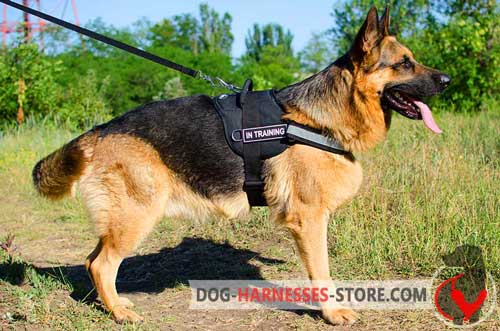 Nylon German Shepherd Dog Harness Intended for Different  Purposes
