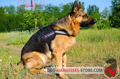 Comfortable German Shepherd harness for effective training