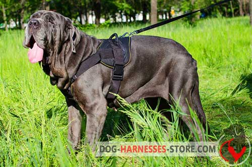Nylon Mastiff Neapolitan Harness with Comfortable Chest Plate