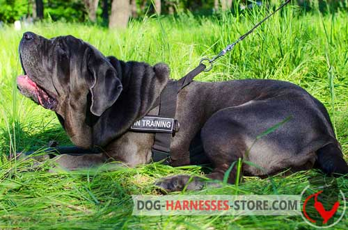 Nylon Mastiff Neapolitan Harness with ID Patches