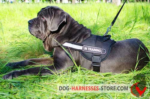 Nylon Mastiff Neapolitan Harness with Reflective Chest Strap