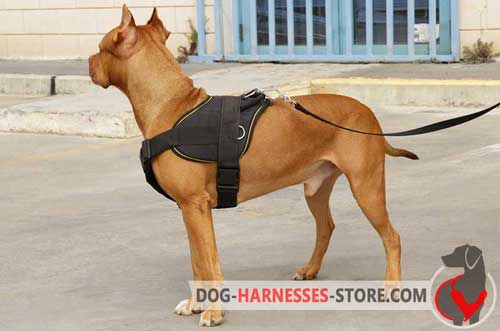 Superb design leather harness for Pitbull