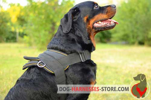 Nylon Rottweiler Harness For Pulling