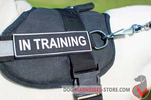 Identification nylon dog harness with patches