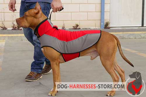 Non-restrictive Pitbull winter coat