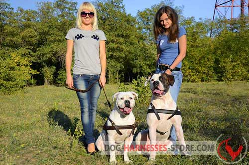Leather American Bulldog Harness Comfortable for Pulling
