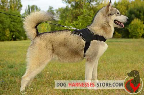Pulling Malamute Harness Made Of Strong Nylon