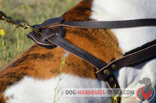 Pulling leather dog harness with brass fittings
