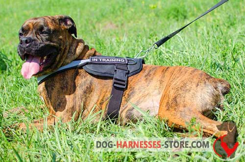 Reflective Boxer harness with ID-patches