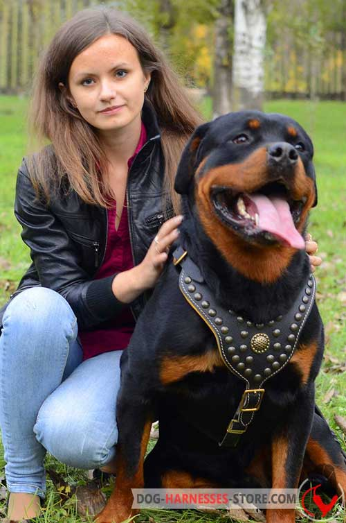 Padded on the chest Rottweiler leather harness