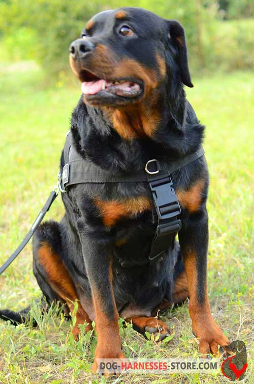 Feature-rich Rottweiler harness with plastic quick release buckle