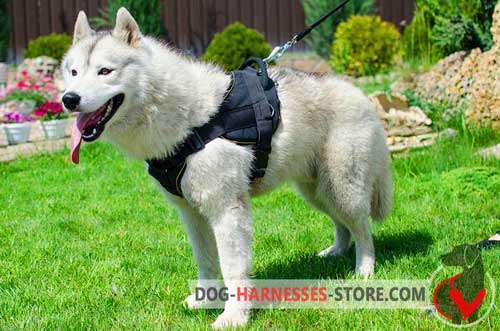 All weather nylon harness for Siberian Husky