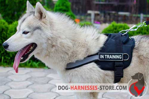 Easy to fit Nylon harness for Siberian Husky