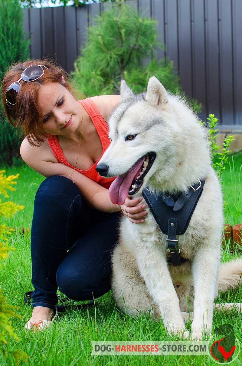 Siberian Husky Walking Leather Dog Harness Handmade