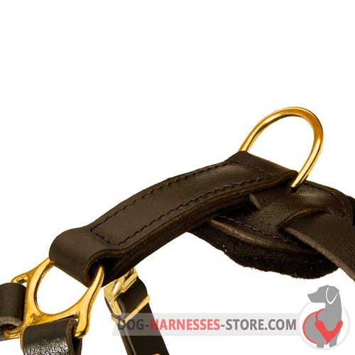 Brass Hardware on Leather Dog Harness