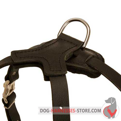 Nickel Plated D-Ring on Leather Dog Harness