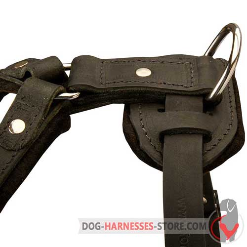 Nickel Plated Hardware on Leather Dog Harness