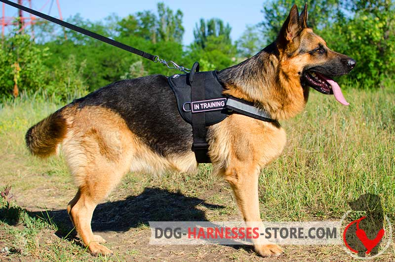 Strong Dog Collars And Harnesses