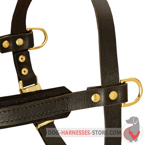 Training leather dog harness with riveted details