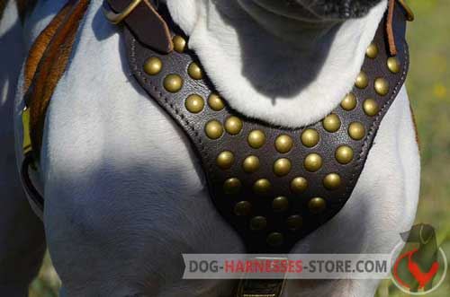 Wide Leather Dog Harness with Studs