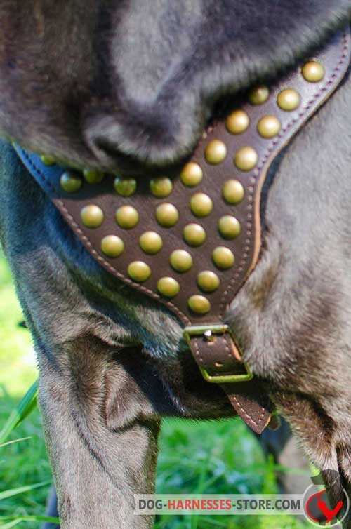 Walking Leather Dog Harness Decorated with Studs