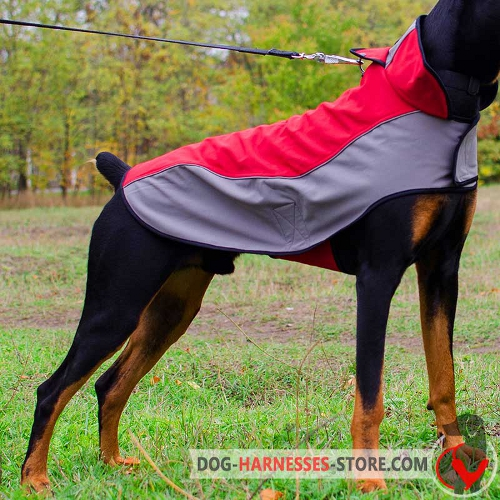 Warm Doberman coat for winter activities
