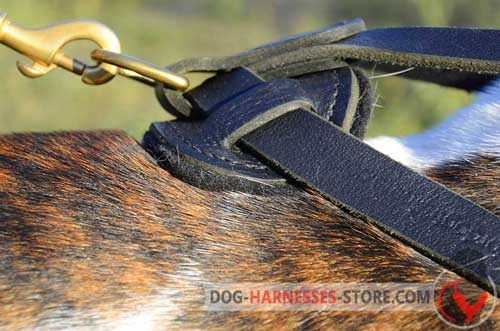 Leather dog harness with special ring for leash attachment